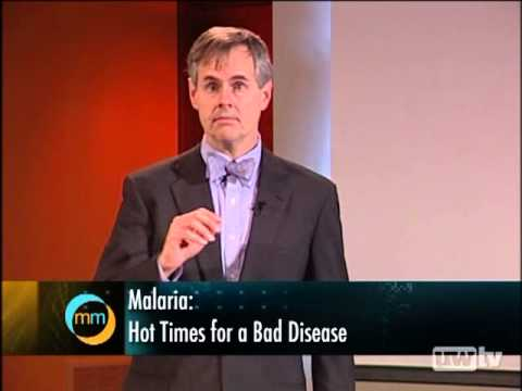 Malaria: Hot Times for a Bad Disease
