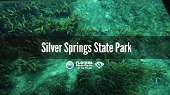 Firsthand Florida Fun: Silver Springs State Park