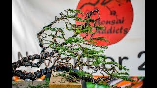 Raft Style Bonsai Demonstration with Antony Smith