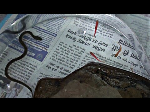 Underwater Fish Hunting By Water Snake | Chirayu Medical College and Hospital Bhopal Madhya Pradesh