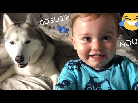 Baby Argues With Dad Refusing To Sleep Till He Gets His Huskies! [TRY NOT TO SMILE]