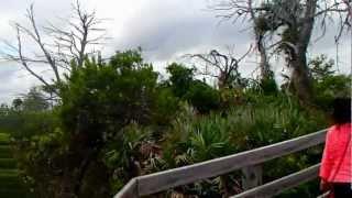 № 2447 США Едем в Майами Остановка - Супер Парк Флориды 10.05.2012