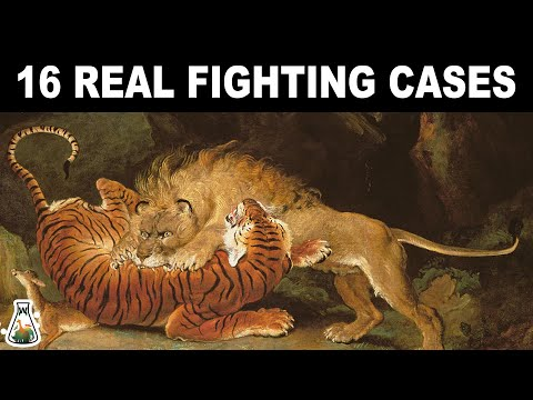 LION VS TIGER - 16 Real Fighting Cases