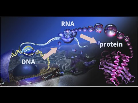 Understand Central Dogma of Molecular Biology | DNA to RNA to PROTEIN