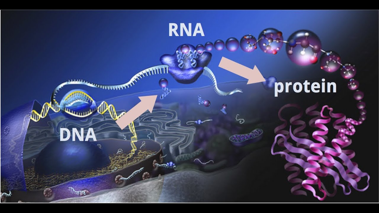 3d Virus Wallpaper Understand Central Dogma Of Molecular Biology Dna To Rna