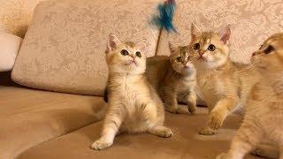 おもちゃひとつで発動する楽園。5匹の子猫たちによるシンクロ
