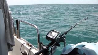 賓利號 船釣大石斑 X4中風了  grouper fishing thumbnail