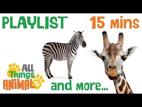 AFRICAN ANIMALS | Animals playlist for children. Kids videos. Kindergarten | Preschool learning
