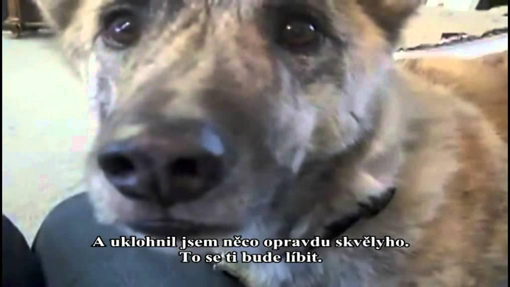 Talking Dog Video Yeah