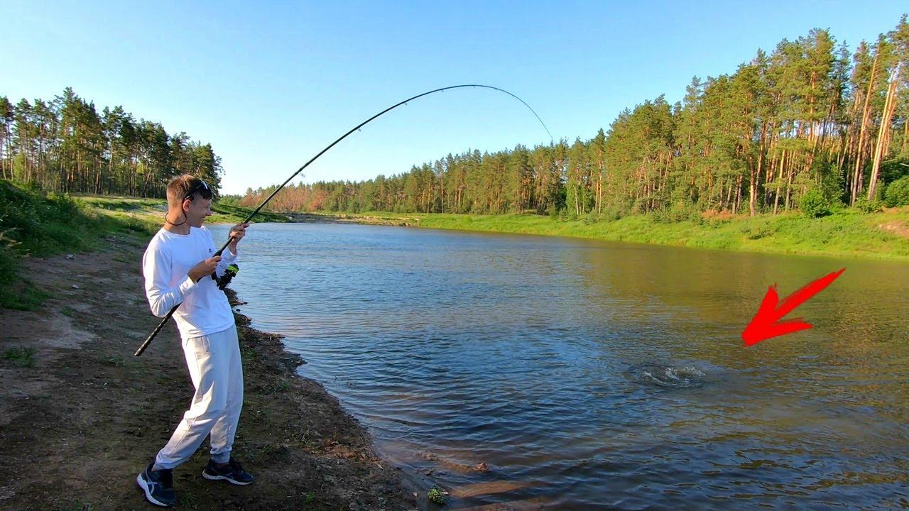 Сазан чуть не утянул сына в воду! С кормачками за карпом! Рыбалка на лесном озере!