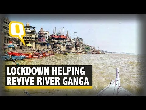 Amid COVID-19 Lockdown, Health of River Ganga Improves | The Quint