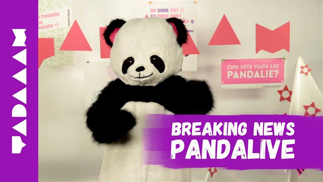 Pandalive