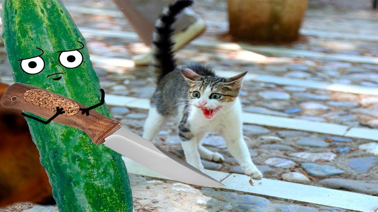 Cats scared of Bananas And Cucumbers - Cats Vs Cucumbers ... Funny Cat Videos Cucumbers
