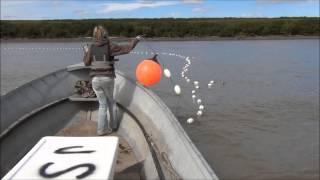 Drift Gillnetting Salmon on the Yukon River, Alaska 2013