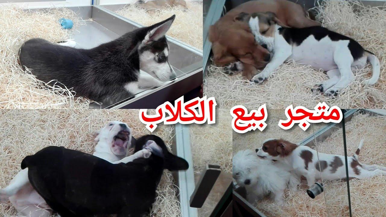 متجر بيع الكلاب و القطط و مستلزماتها في باريس Youtube