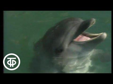 Клуб путешественников. Поисковые дельфины в Черном море (1990)