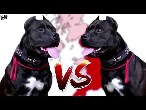 Видео: 5 САМЫХ ОПАСНЫХ пород собак!