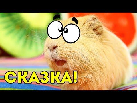 Мультфильм про морских свинок смотреть онлайн