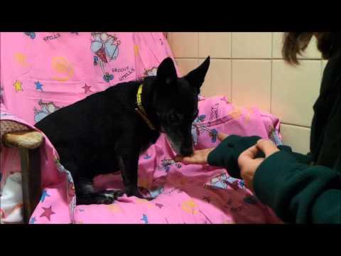 Dogs Trust Leeds: Spock