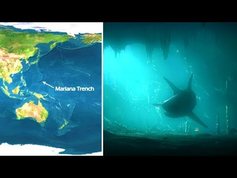Does A Megalodon Shark Live At The Bottom Of The Mariana Trench?