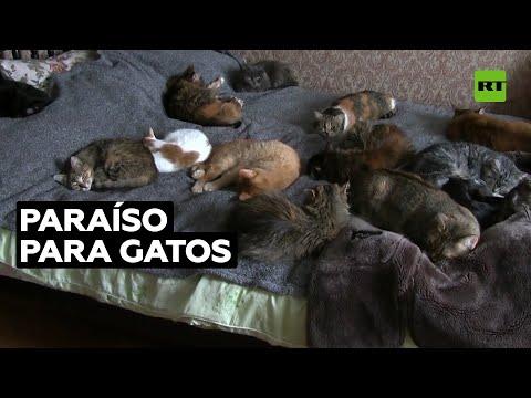 Vende su piso para comprar una casa en la que alojar a decenas de gatos