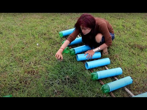 Thumbnail: Smart Girl Make Fish Trap Using Plastic Bottle And PVC Pipe To Catch A Lot Of Fish