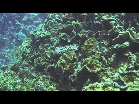 Survey of the Fringing Reef of Marsa Shagra