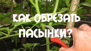 Пасынкование томатов. Как обрезать пасынки на помидорах.(Пасынкование томатов. Как обрезать пасынки на помидорах. Пасынкование, удаление пасынков — это агрономиче..., 2015-06-28T15:57:16.000Z)