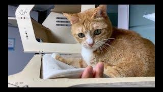 고양이와 손가락으로 놀아줬습니다.