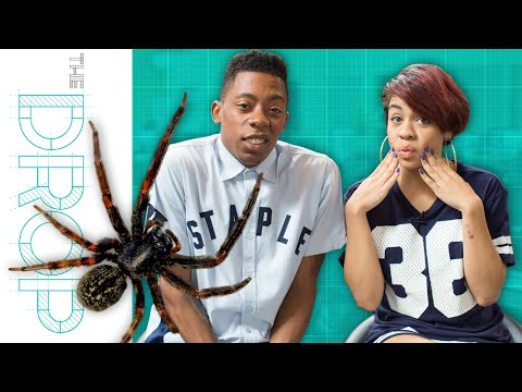 It's Raining Spiders in Australia?? – The Drop Presented by ADD