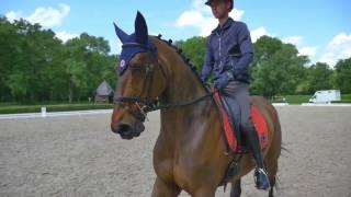Equitation : Victor Levecque, jeune prodige yvelinois