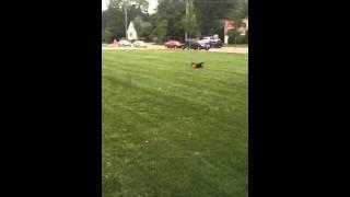 Blazer playing soccer