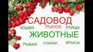 САДОВОД/РЫБКИ/КОШКИ/ПТИЦЫ/РЫНОК МОСКВА