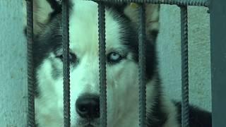 მიუსაფარი ცხოველებისთვის არსებულ თავშესაფარში ძაღლები პრევენციის მიზნით ყოველდღიურად მიჰყავთ