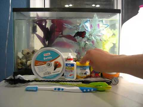 betta fish supplies what you need youtube