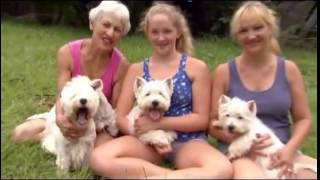 DOGS 101   West Highland White Terrier ENG