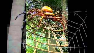 видео Поделки из природного материала паучок на паутинке. Поделка паучок на паутине из природного. Осенние поделки в подготовительной группе «Паучок на паутинке». Мастер-класс с пошаговыми фото