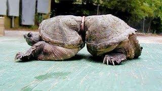 Эта Черепаха Шокировала Весь Мир