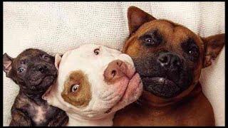 【珍しい】大親友の犬たちの元へやってきた可愛すぎる動物の正体とは?異様な家族にも関わらず、彼らは多くの動物たちの救世主となっていた!【広めたい話】