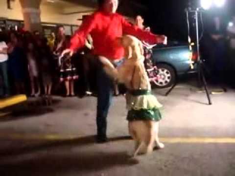 Когда собака танцует лучше тебя