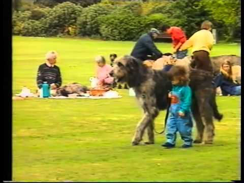 Con , Tallest Dog, Irish Wolfhound Club ,1994.