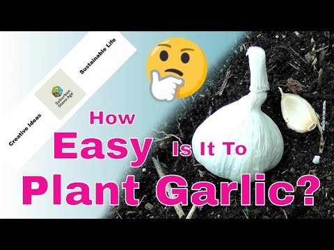 How Easy Is It To Plant Garlic? Fast and Easy Garlic for the Garden Video!
