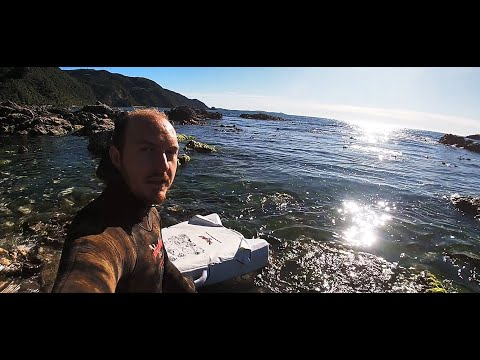 Kaikoura Catch And Cook Vlog #1