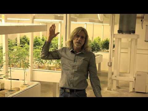 Grow Cannabis – Airflow – by Jorge Cervantes