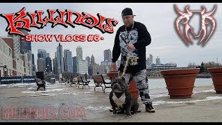 ABKC NATIONALS 2017 KILLINOIS KENNELS SHOW VLOG#6 AMERICAN BULLY DOG SHOWS