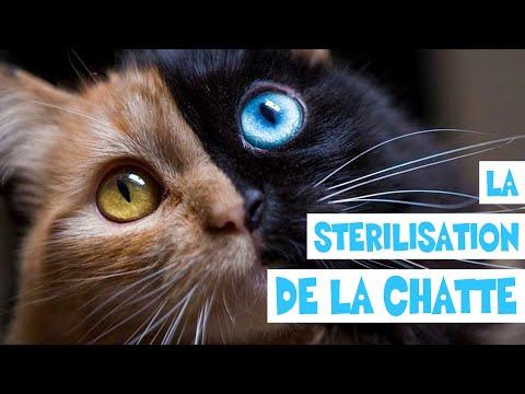 LA STÉRILISATION DE LA CHATTE - [Bonus] ACDR FAMILY #18