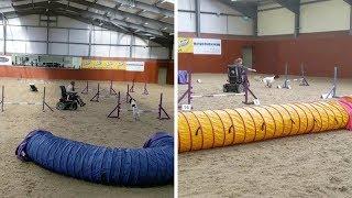 Disabled Girl Becomes Master Dog Trainer