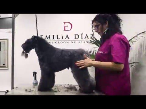 Arreglo de Kerry Blue Terrier por Emilia Díaz