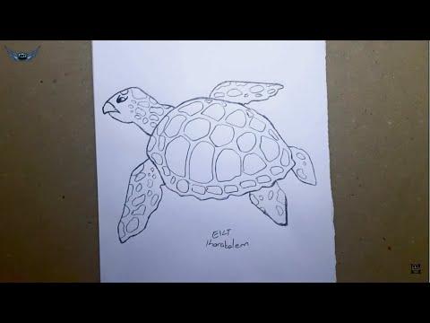 Kolay Caretta Caretta Kaplumbağa çizimi Kaplumbağa Nasıl çizilir