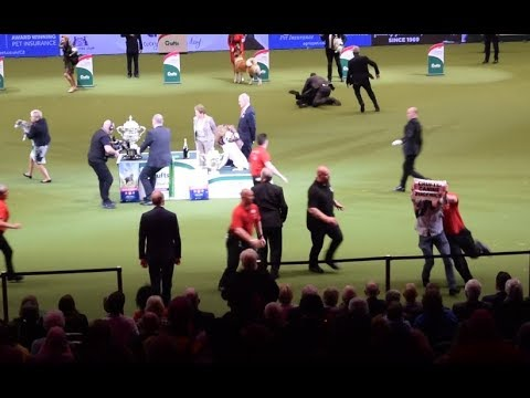 Activists Crash Crufts' 'Best in Show' to Protest Extreme Dog Breeding